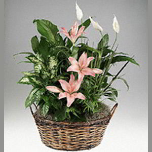 Parsippany Florist | Lily Garden